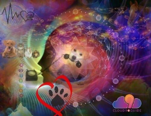 Pet Health Communication, Questions & Information - Cloud 9 Guide